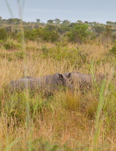 KrugerParkREIZ&HIGHRES-83