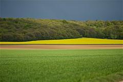 5 couleurs et des nuances (mifranc91) Tags: 8180 ciel d700 fleur flower land landscape light lumière nikon2 nuage paysage printemps spring terre