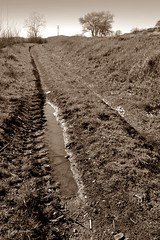 Path with puddle (Zsofia Nagy) Tags: 7daysofshooting week42 leadinglines shootanythingsaturday path rural field village puddle sepia transilvania romania erdély