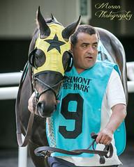 Metaurus (EASY GOER) Tags: horse racing belmontpark sports races equines thoroughbreds canon5dmarkiii