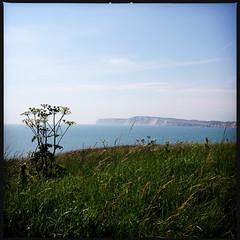 2014-06-22-0122.jpg (Fotorob) Tags: water engeland kust planten isleofwight england freshwater