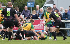 BW0Y2942 (Steve Karpa Photography) Tags: henleyhawks henley rugby rugbyunion game sport competition outdoorsport redruth