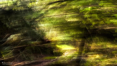 spring blew in from the north (Shannon Leigh Photography) Tags: trees motion blur busy spring forest nature green slp shannonleighphotograpy princesspark