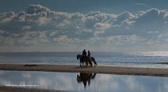 beach reflections (dewollewei) Tags: ameland waddeneilanden wadden paarden horse sea reflections reflectie hollum strand beach friesland zee