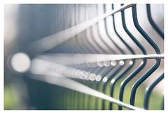Parallel Lines _ 2 (leo.roos) Tags: parallellines perspective perspectief pattern symmetry fence fencing hek tessar exakta meyerprimotar8035 a7rii dayprime day80 dayprime2017 dyxum challenge prime primes lenzen brandpuntsafstand focallength fl darosa leoroos sonyflickraward