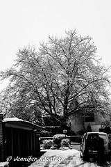 Februar in schwarz weiß (Bernsteindrache7) Tags: water winter wasser white snow flora fauna frozen outdoor tree panasonic lumix black urdenbach düsseldorf germany nrw