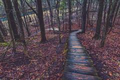Chimney Rock Trail in Spring (Tony Webster) Tags: chimneyrocktrail minnesota whitewaterriver whitewaterstatepark leaves river spring steps trees saintcharles unitedstates us