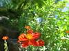 IMG_3311 (reuse) Tags: mayflowers