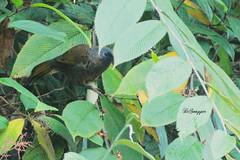 IMG_7335_DS (Ganugapenta NaveenKumar Reddy) Tags: northeast northeastindia mishmihills canon7d disnapper guyonblackybx gnaveenkumarreddy ganugapentanaveenkumarreddy gnr ganugapenta