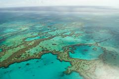 Coral reef (Josué Godoy) Tags: coral reef australia sea seascape mar mer bleu blue azul