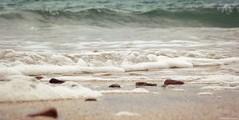 Ça mousse... (Noemie.C Photo) Tags: mer sea plage beach sable sand galet stone shell eau water mousse ecume light lumiere details specifics nature blue bleu