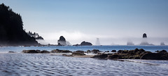 Sea Stacks in Fog (ebhenders) Tags: sea stacks pacific ocean olympic national park morning fog water sand rocks