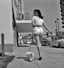 Young Woman with Short-Shorts and Toy Poodle (kevin63) Tags: lightner vintagecheese facebook woman dog poodle leash losangeles street sidewalk summer attractive brunette shapely highheels belt print blackandwhite fifties sixties hoop earrings cadillac policecar