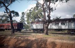 - (_barb_) Tags: holga holga135 porta160 australia mornington train vintagetrain gumtree rural film 35mm