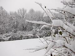 IMG_2819 (sjj62) Tags: s90 snow snowscape lith lakeinthehillsil winter winterscape