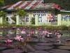 © Indonesia Lotus Pond House Laundry West Sumatra Southeast-Asia Sumatera Barat – Indonesien Südost-Asien (hn.) Tags: asia asien barat copyright copyrighted heiconeumeyer id indonesia indonesian indonesien indonesisch southeastasia sumatera sumaterabarat südostasien westsumatra lotusblüte lotusblossom lotus lotos lotosblume wasserpflanze blüte blume flower flora lotusflower aquaticplant lotosblossom waterlilies waterlily aquaticherbs seerose seerosengewächse nymphaeaceae pond teich pink rosa house haus blossom wäsche laundry