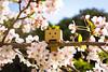 Shiroyama park / Canon EOS60D:Canon EF-S60mm F2.8 Macro USM (telenity) Tags: japan tateyama sakura danboard mini macro chreey blossom beautiful canon cute 日本 館山 城山公園 さくら 桜 ダンボー ミニ
