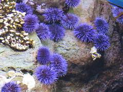 anemone 04 (thedawnsbrain) Tags: sea anemone seaanemone