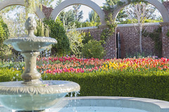 Secret Garden (aaronrhawkins) Tags: fountain flowers tulips wall door entrance mysterious mystery secret water morning sunlight colorful grounds garden thanksgivingpoint tulipfestival aaronhawkins lehi utah spring