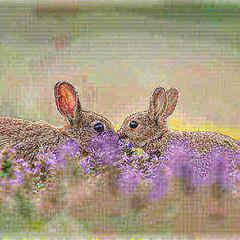 34215869186_1b286aea95.jpg (amwtony) Tags: heathrowgatwickcarscom instagram european rabbit £european outdoors animals 341051574018ca2f0a50cjpg 3385184536054b44e2366jpg 34105609041101e0bbf78jpg 34236093465ece4972045jpg 34236237805810efdb7b4jpg 3419614267680248d853cjpg 34196281676d5c2e7b90cjpg 333954470949889fbba65jpg 33406211464e6fc7c9ca5jpg nature 341173798413e8066f1c7jpg 338641169005438812ec8jpg 3386445253005c94d116ejpg 34248191735859a1c06e2jpg 334072897046a6774af94jpg 3340746003412140d0f4cjpg 334076251242daaca13cfjpg 34248974795446f4a662ejpg 342492433757270b35db1jpg 334395869135cfb2aa68fjpg 341195643510294a1fdd6jpg 3340897491482d6b22df1jpg 334092727643abea2124djpg 34093767412ae5caf23b3jpg 34210599686cdf6f00124jpg 342109631462ab7800c6ejpg birds 3412116508138d5f44949jpg 33410559234d25f97fbd8jpg 33868460960d9575f1d9bjpg 33442359043f370a56fdbjpg 34252617035298d96dbf3jpg 34095978892bff39c13fajpg 334430316139acb579d5fjpg 3409638283266c3671e67jpg 34253425305a1afdc17d7jpg 34213291596214a49bf76jpg 334440434836274ac3bd9jpg 33870693860d5023b5c2djpg 334445965833c693f66f9jpg 338710847608eff10a7a5jpg 33413610914ac11ea8c69jpg 3425499922591880a9fbcjpg 33414065624002f8682fdjpg 3421517967627fa10e582jpg 34215605546ab0c9f0cf7jpg