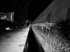 je voulais juste une fleur... (mariej55quebec) Tags: seoul corée korea fleur flower lumière light noir dark night vanishing black
