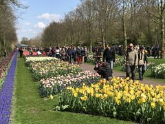 Keukenhof - Tulip Gardens (darrenboyj) Tags: keukenhof holland gardens flowerbed people attraction busy event spring pretty colour color colorful colourful lines