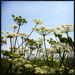 2014-06-22-0098.jpg (Fotorob) Tags: planten engeland isleofwight england freshwater