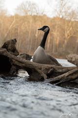 5D3_3061 (zjernst) Tags: 2017 atlanta georgia water hiking river
