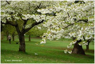 Bracketing - Queen Elizabeth Park XP6409e