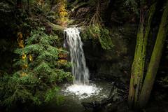 01/28/2017 - Big Basin State Park (lalitkumarj) Tags: bigbasin waterfall logs light nature moss water fantasy forest woods myatical bayarea redwoods california magical