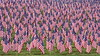 Field of Flags (tomcanon68) Tags: canon40d canon canon70300mmf456isii flag field cemetery york yorkpa remembrance