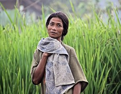Desa Atas Awan (Shavasti) Tags: bali woman rural rice photojournalism