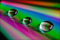 Wet Wet Wet CD (Yvette-) Tags: wet water drop macromondays nikkorf28105mm nikond5100