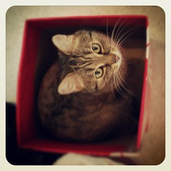 cat in Box (Silvio Prahl) Tags: cute love smile cat box mobilephone katze bruno dresdenlbtau flickrandroidapp:filter=none