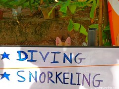 "Diving • <a style=""font-size:0.8em;"" href=""http://www.flickr.com/photos/92957341@N07/9165747718/"" target=""_blank"">View on Flickr</a>"
