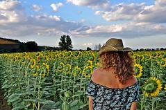 pareva d'esse' in Texas ma invece s'era dietro casa mia.... (Claudia Gaiotto) Tags: flowers summer woman nature landscape sunflowers livornoalone dedicataamarchino parevadesse