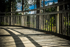 Slats and Shadow (@houdi_) Tags: trees pine forest fir inverness abriachan lochlaide abriachanforesttrails