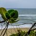 "Vegetação rasteira da praia • <a style=""font-size:0.8em;"" href=""http://www.flickr.com/photos/39546249@N07/9539721357/"" target=""_blank"">View on Flickr</a>"