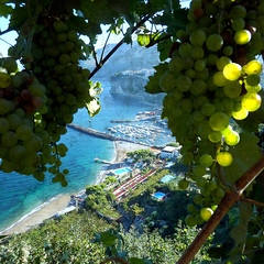 Seiano seen through the grapevine (jjamv) Tags: blue trees sunset sea sky italy mountains tree texture beach nature water clouds marina capri coast harbor boat barca italia mare campania cathedral wine harbour meta gothic iglesia chiesa nave grapes pompeii napoli naples positano vesuvius sorrento bayofnaples vesuvio ischia spiaggia amalfi textured pompei pe