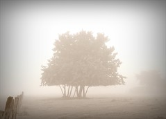 Somain-Villers-Campeau in the mist 1 (april-mo) Tags: autumn mist france misty countryside arbre brouillard nord brume countrylife mistymorning treesinmist arbredanslabrume villerscampeau chemindesgalibots