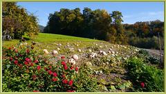 Pumpkins ...wb169-0454 (Aureusbay) Tags: autumn germany farm pumpkins agriculture bodensee krbisse badenwurttemberg lakeconstance mft owingen dmcgx1 pz1442mm