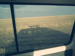 Masai Mara (JoelyBoyd) Tags: africa wild summer elephant hot animals dead photography kenya wildlife lion lizard safari leopard views mara rhino zebra cheetah giraffe hippo samburu masai aberdares masaimara africasafari