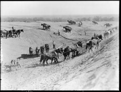 Excavating at Iron Knob (State Records SA) Tags: horses blackandwhite photography australia historical southaustralia ironknob frankhurley srsa staterecords staterecordsofsouthaustralia staterecordsofsa
