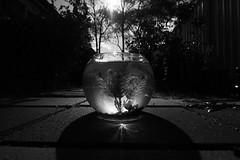 Fish Bowl (Joel Bramley) Tags: light white fish black afternoon bowl refraction