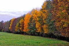 Colour line (stefanh.varberg) Tags: autumn trees tree grass nikon sweden autumncolors coolpix halland p310