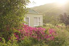 Last light (Steve Attwood) Tags: pink light newzealand canon garden landscape evening coast twilight taylorsmistake cottage canterbury hills bach geranium bankspeninsula