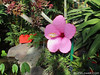 "LEGO Hibiscus • <a style=""font-size:0.8em;"" href=""http://www.flickr.com/photos/44124306864@N01/10926281224/"" target=""_blank"">View on Flickr</a>"