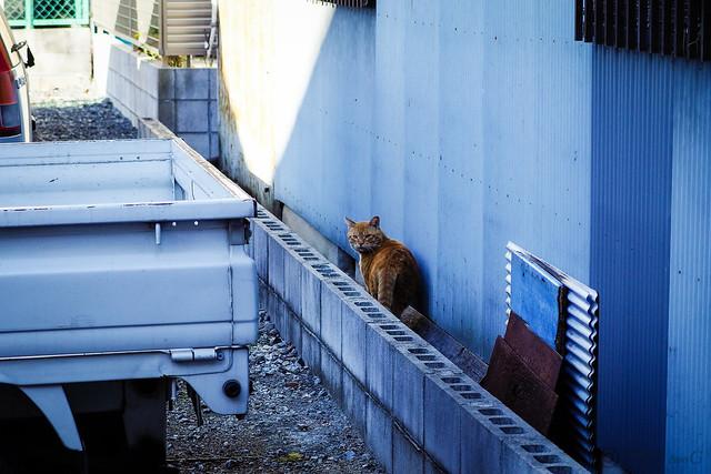 Today's Cat@2013-11-23