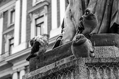 Cold Pigeons (daviwie) Tags: vienna wien urban bw white black cold bird statue austria blackwhite österreich pigeon pigeons oesterreich