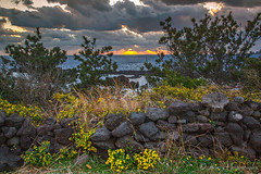 Flowers and Stones and Filtered Sunlight (eric_hevesy) Tags: flowers winter light sunset sky sun beautiful yellow clouds canon landscape island evening photo interesting colorful rustic southkorea setting jeju 2013